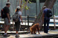 orangutan-tour-img-13
