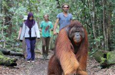 orangutan-tour-img-16