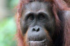 orangutan-tour-img-20