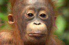 orangutan-tour-img-21