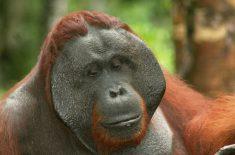 orangutan_tour_img_2540