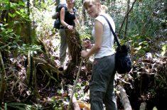 Orangutan_Tour_CIMG3246
