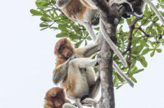 Orangutan_Tour_IMG_1200