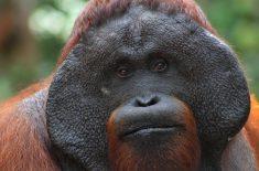 orangutan-tour-img-12-01