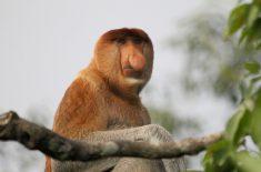 orangutan-tour-img-19