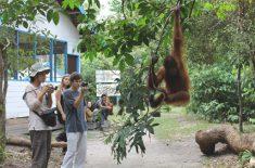 orangutan-tour2