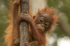 orangutan_tour_IMG_1673